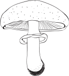 Mushrooms (champignons)